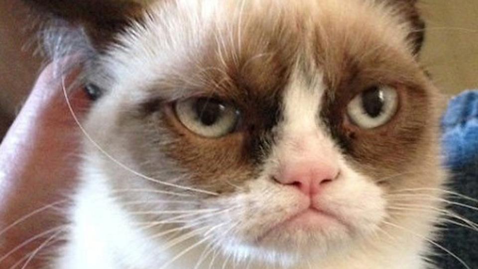 CatGrumpy