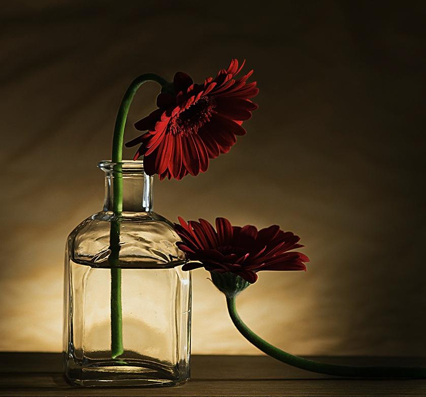 FlowersVaseAdoring